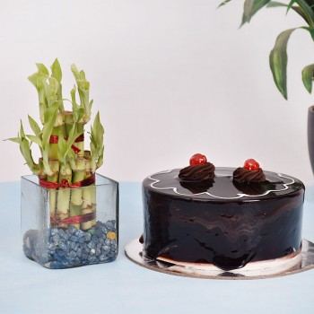 Lucky Bamboo n Cake