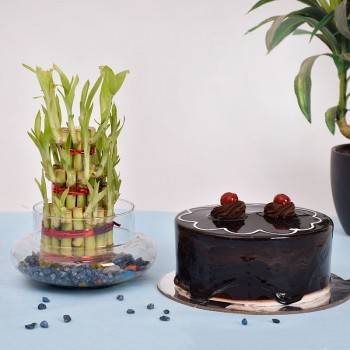 3 Layer Lucky Bamboo n Cake